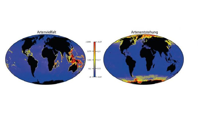 Global maps of species richness (left) and speciation rate (right).