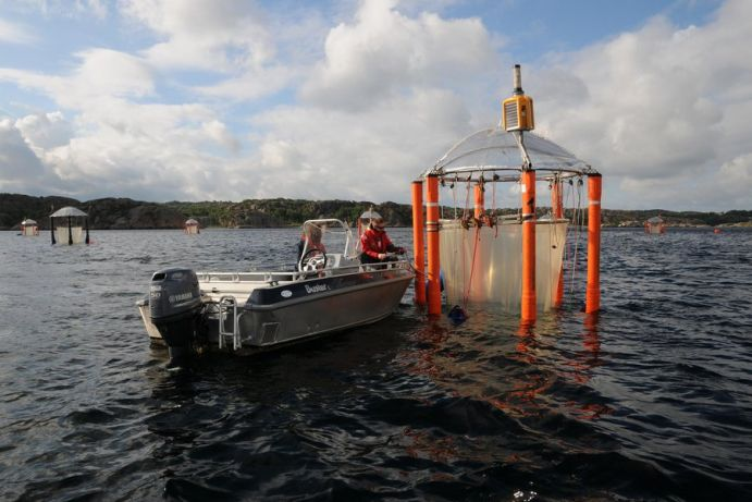 In several long-term experiments with the KOSMOS meskosms, BIOACID members investigated the impacts of ocean acidification on marine oceans.