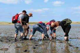 Wadden Sea sampling