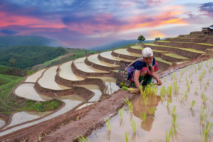 Water as a basis of our food: here, rice cultivation in Thailand.
