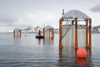 Ten KOSMOS Mesocosms are anchored  in the swedish Gullmarfjord for the longterm experiment on ocean acidification.