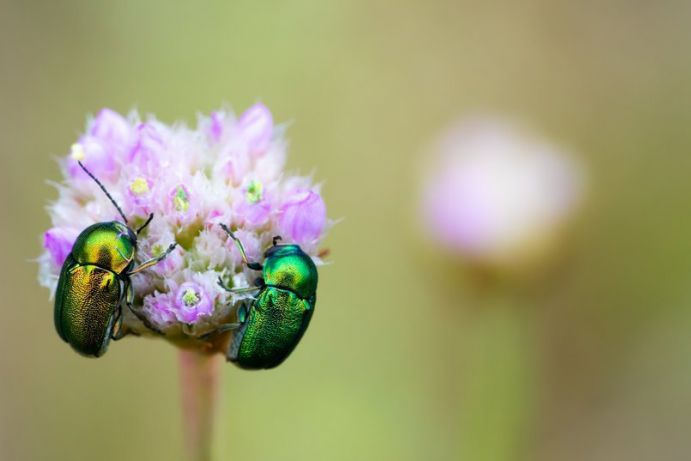 The number of flying insects in Germany has drastically decreased over the past three decades.